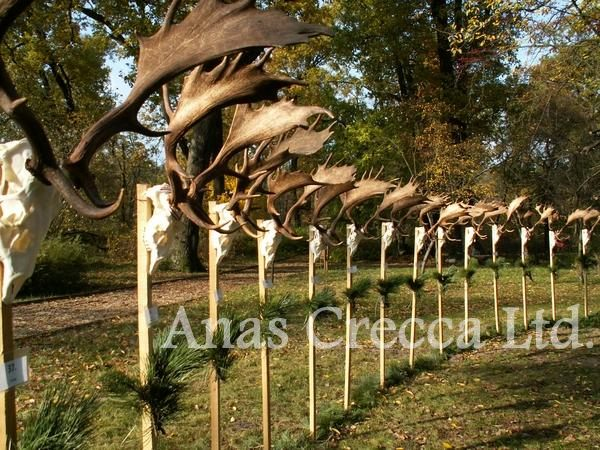 fallow_stag_hunting_in_hungary_07.jpg