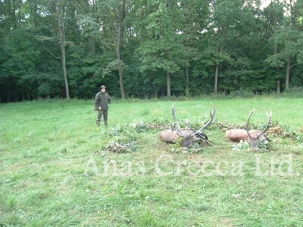 red_stag_hunting_in_hungary_16.jpg