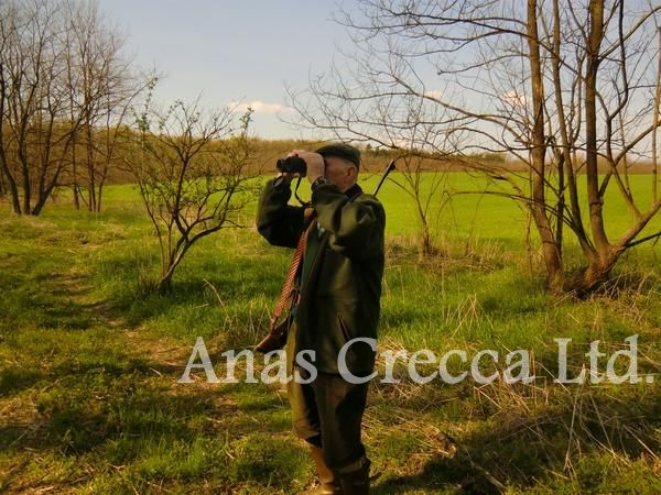 roe_buck_hunting_in_hungary_02.jpg